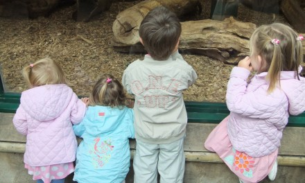 Our trip to Chester Zoo