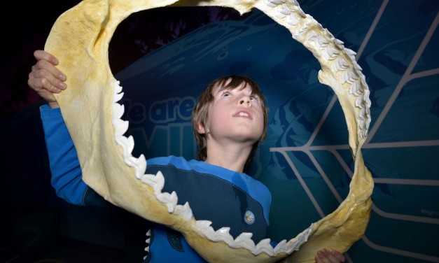 Armoured Army Invades Sea Life Manchester