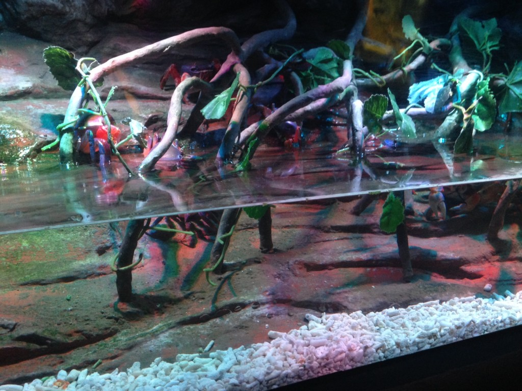 We?ve never been to Sea Life Manchester before and enjoyed ...
