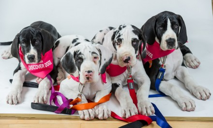 Win Tickets To Eukanuba Discover Dogs