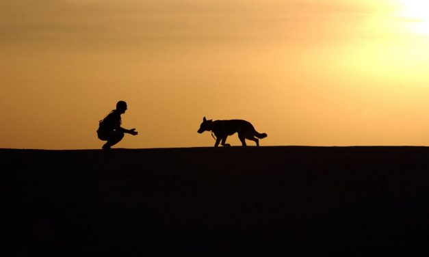 THE CRITICAL ROLE A DOG TRAINER PLAYS IN A DOGS BEHAVIOUR