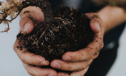Rubbish Clearance: 11 Weird Things You Can Compost