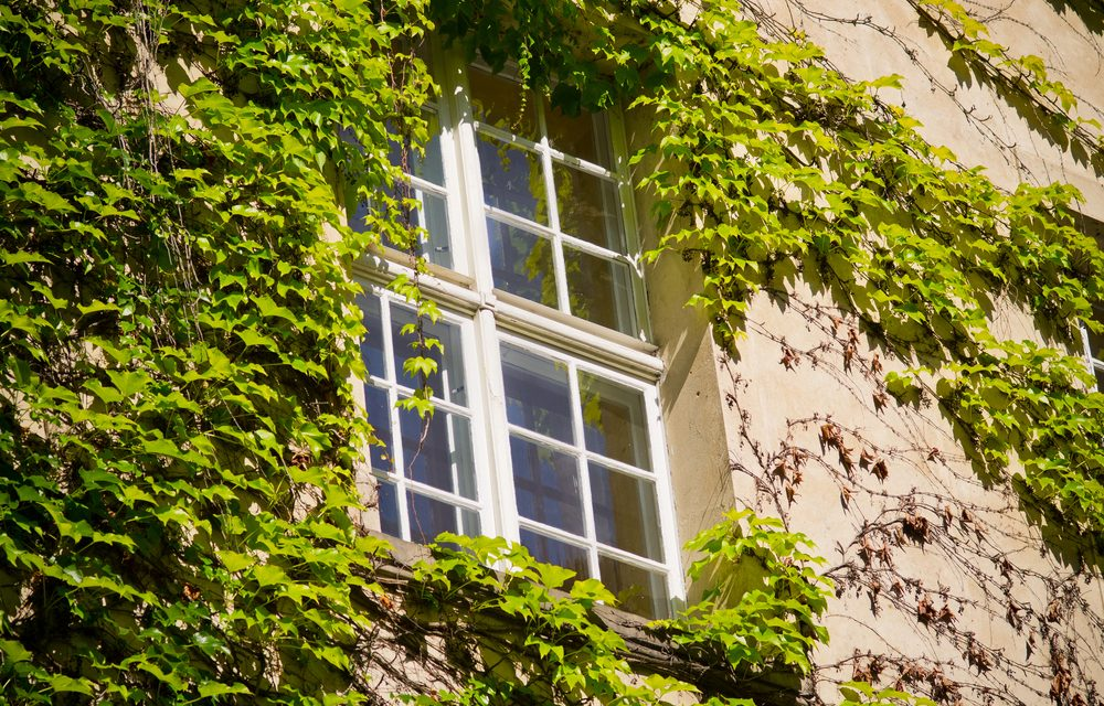 How to Maintain your Sash Windows?
