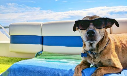 How to Keep Your Dog Cool During Summer