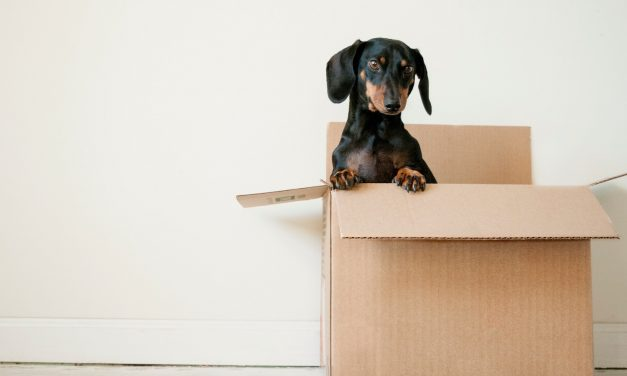 5 Things to Do When Moving House