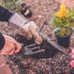 6 Steps to Getting Your Garden Ready for Summer