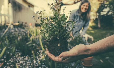 Perfect Gifts Ideas for Gardeners