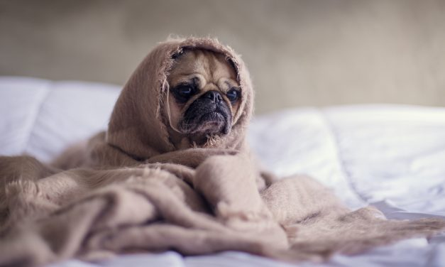 3 Ways to Care For Your Sick Dog