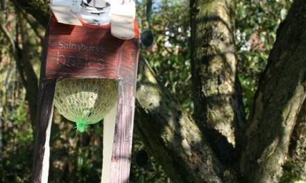 Juice Carton Bird Feeder